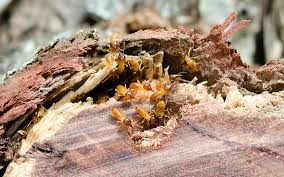 termite treatment brisbane
